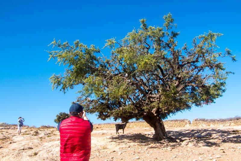 游人在一次旅途上通过摩洛哥 库存照片