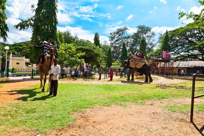 游人在一头大象和骆驼乘坐在一个晴天 迈索尔 卡纳塔克邦 印度 免版税库存照片