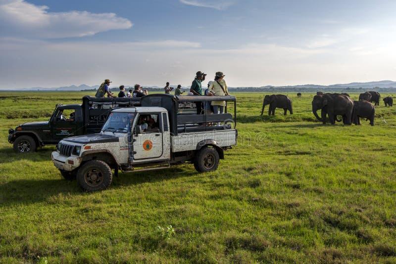游人在斯里兰卡喜欢观看大象牧群  免版税库存照片