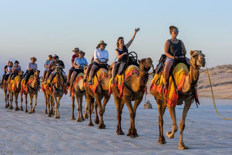 游人在澳大利亚乘坐骆驼队沿一个海滩的 免版税库存图片