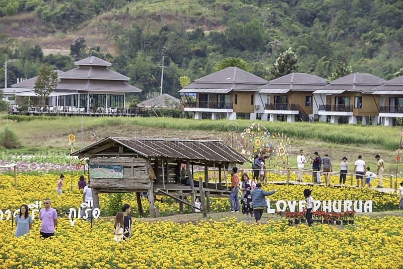 游人在黄色万寿菊花园或Tagetes erecta里在Phu Rua,Loei在泰国,2018年12月29日 库存照片