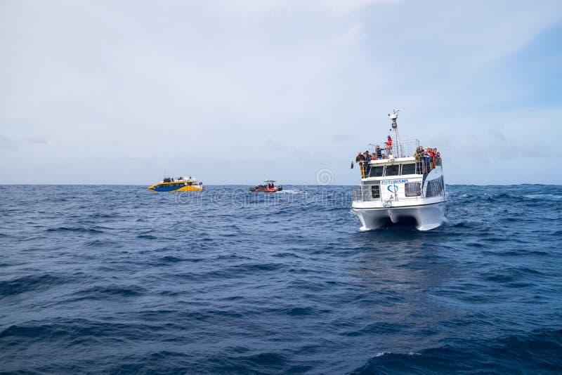 游人是在汽船在观看旅行的鲸鱼和海豚期间 免版税图库摄影