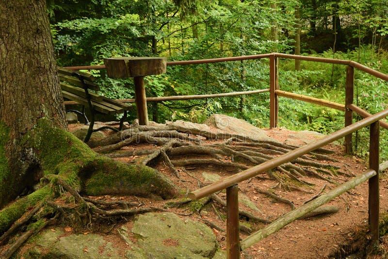 游人的地方在森林里在斯坦贝奇村庄附近的Pressnitz河谷在雨期间的德国矿石山的9月的1日 免版税库存照片