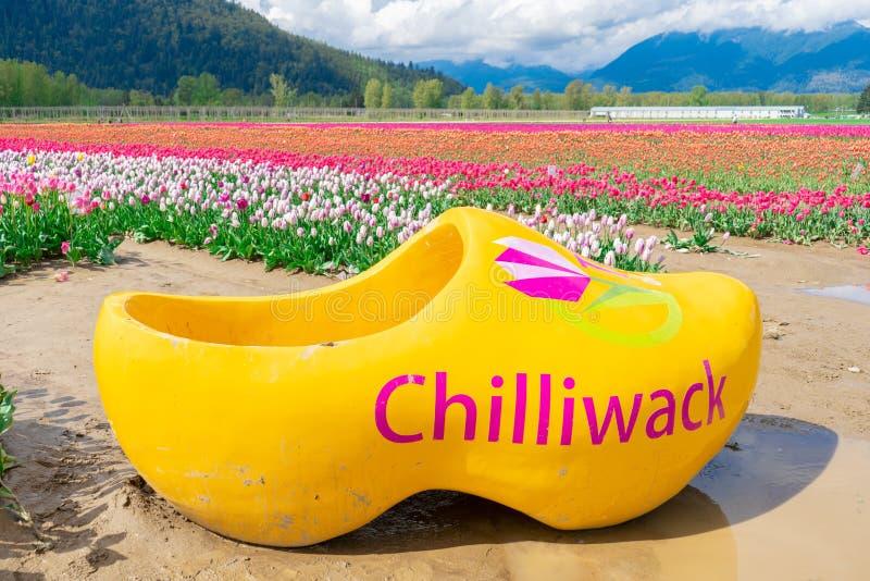 游人的巨型黄色木障碍物能摆在奇利瓦克郁金香节日在加拿大,一个真正的花农场的,有郁金香的 库存照片