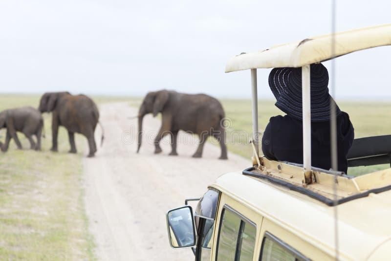 游人观看的大象 免版税库存照片