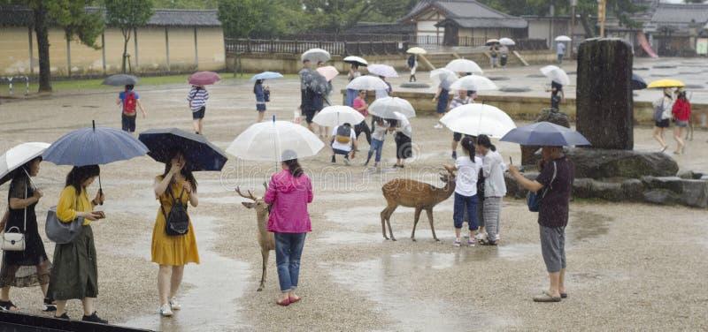 游人饲料鹿在奈良,日本 免版税库存照片