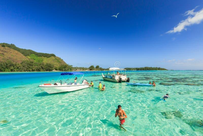 游泳和哺养鲨鱼和黄貂鱼的游人在美丽的海在Moorae海岛,塔希提岛帕皮提,法属玻里尼西亚 免版税图库摄影