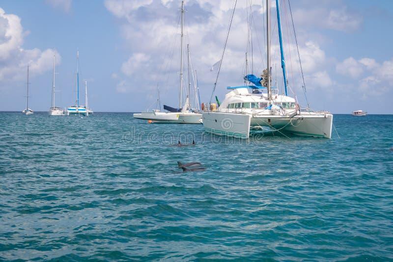游泳在小船-费尔南多・迪诺罗尼亚群岛, Pernambuco,巴西附近的海豚 免版税库存图片