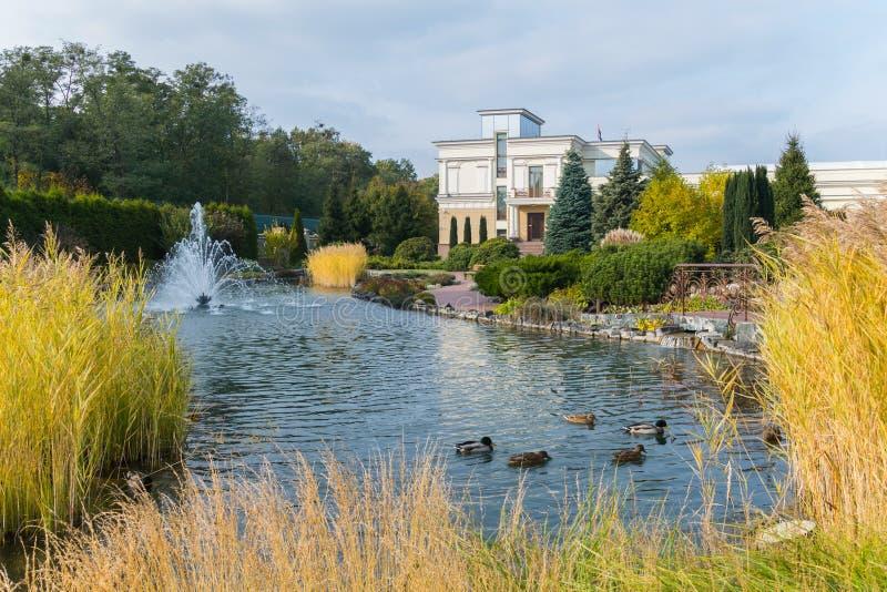 游泳在有喷泉的一个蓝色清楚的湖的鸭子在一个大公园区域的背景 免版税库存图片