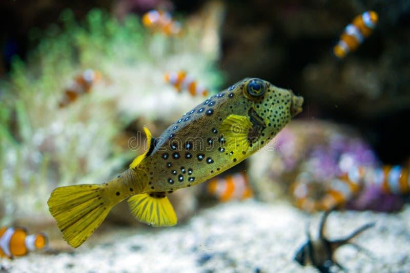 游泳在水族馆的热带五颜六色和滑稽的鱼 图库摄影