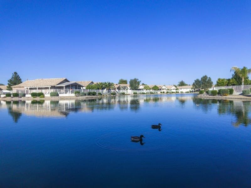 游泳在湖的鸭子 免版税图库摄影