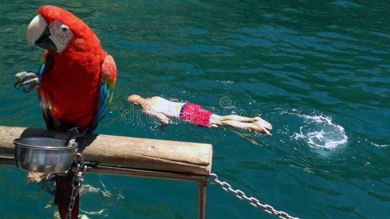 游泳在阿尔加威 库存图片