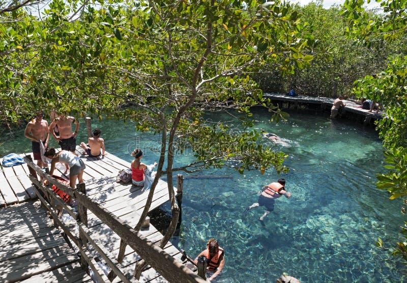 游泳在Cenote Yalahau, Holbox,金塔纳罗奥州,墨西哥的游人 免版税库存照片