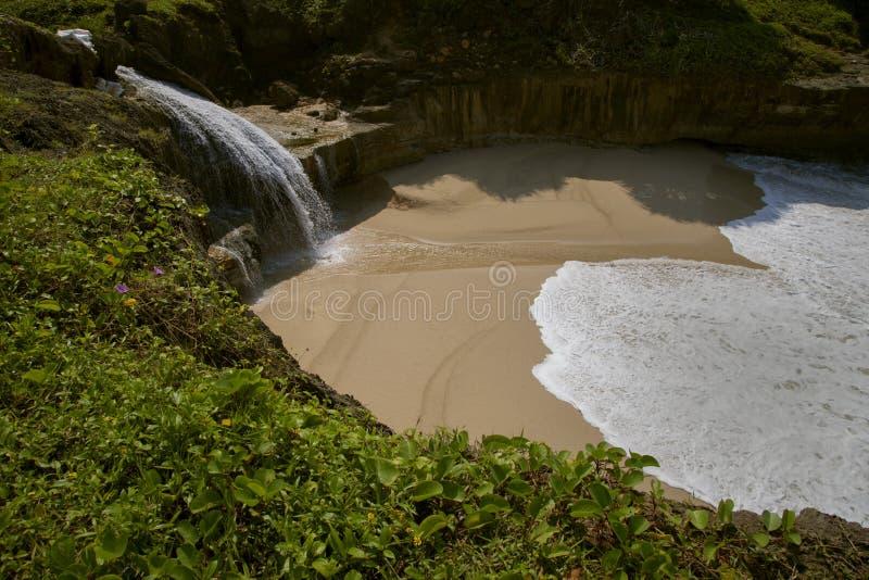 游泳斑点印度尼西亚 免版税库存照片