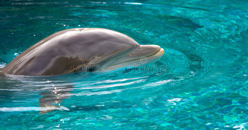 游泳热带水的海豚 免版税库存照片