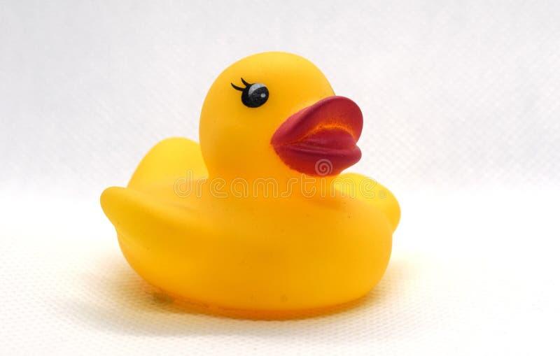 游泳的黄色橡胶鸭子 图库摄影