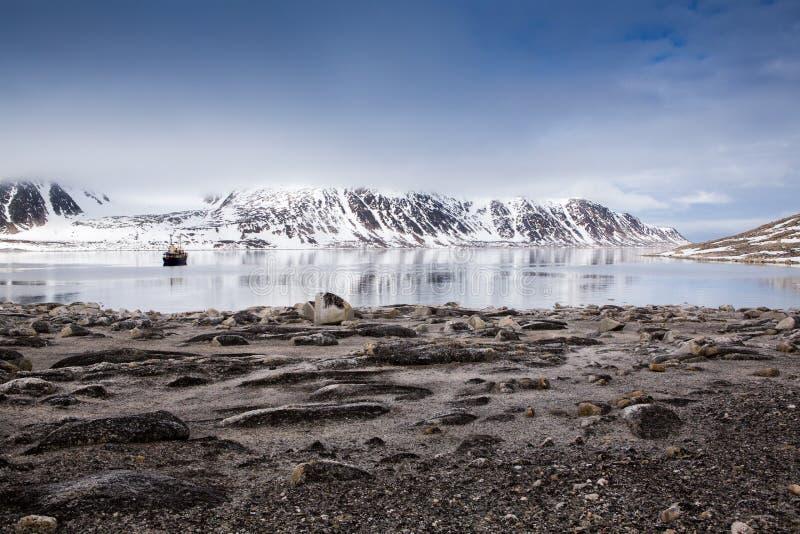 游船在卑尔根群岛。 库存图片