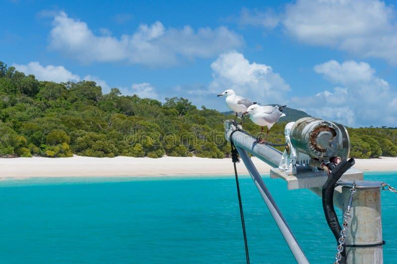 游艇上船桅与海鸥和美丽的热带海滩在backgr 库存图片