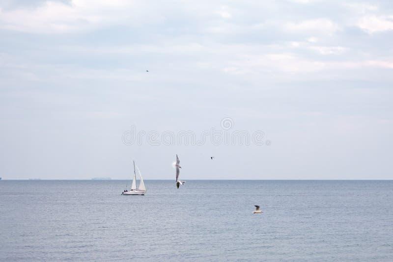 游艇在有很多鸥的公海航行在一个清楚的春日 库存图片