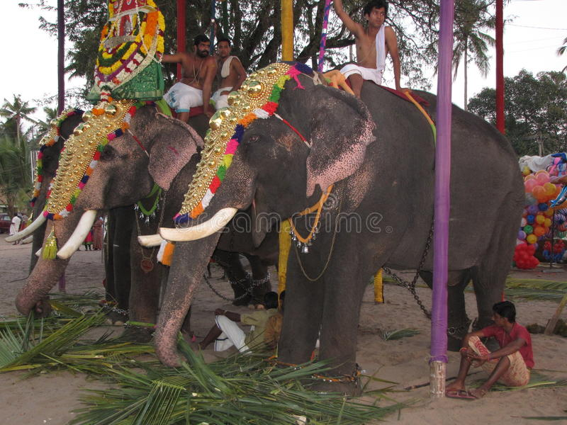 游行大象Kochin印度 库存图片