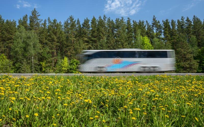 游览车沿沿森林的路冲,路旁用黄色蒲公英盖 免版税库存照片