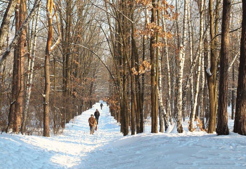 游遍多雪的森林的一个小小组游人在冬天多云天 走通过冬天森林的游人去 免版税库存照片