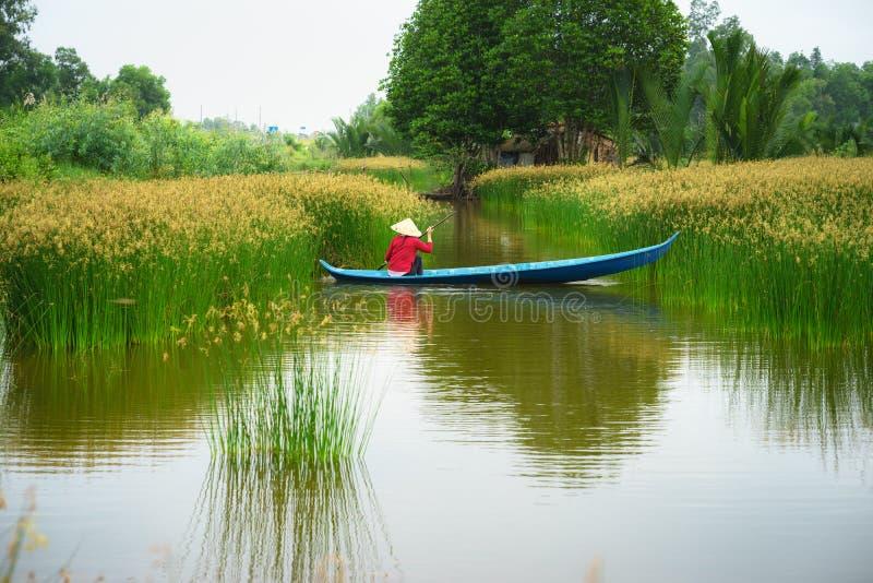 湄公河与越南妇女划艇在Nang -仓促树领域,南越的类型的三角洲风景 库存照片