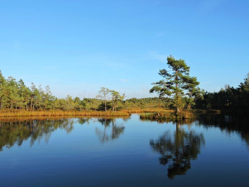 湖、树和美丽的干净的天空,立陶宛 免版税库存照片