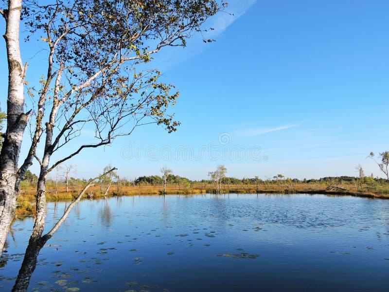湖、树和美丽的干净的天空,立陶宛 库存照片