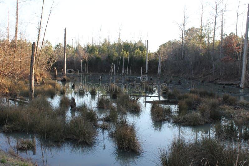 湖、植物水和木头 免版税库存图片