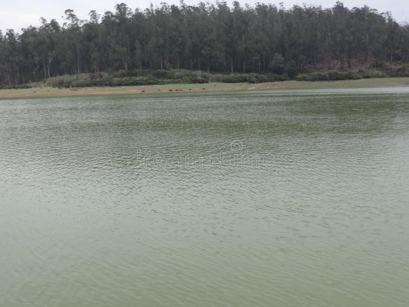 湖令人敬畏的看法有森林背景 免版税库存图片