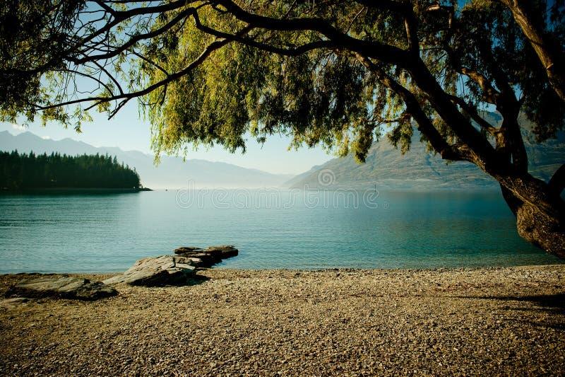 湖倾斜的树型视图 图库摄影