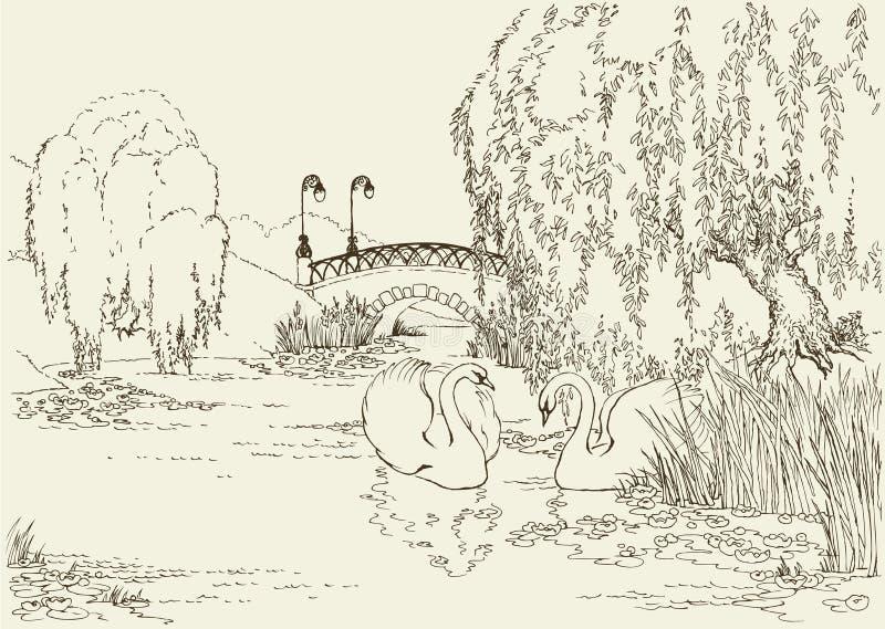 湖公园天鹅二 库存例证