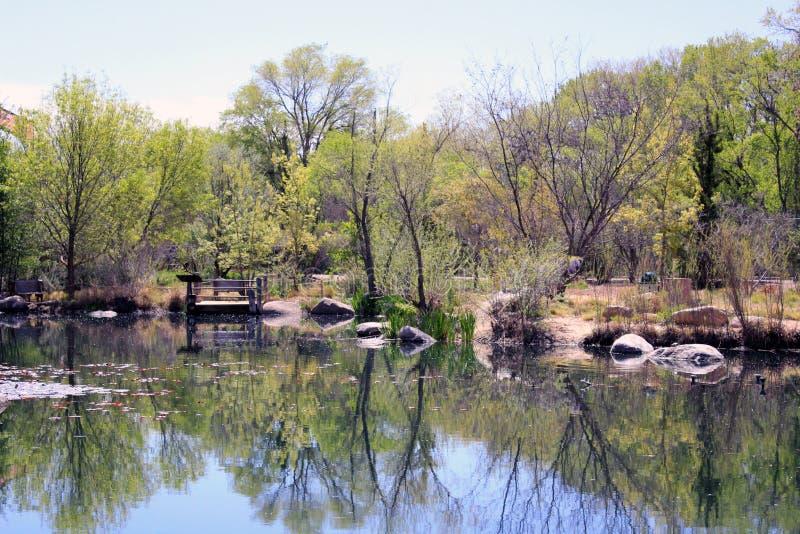 从湖到森林 免版税库存照片