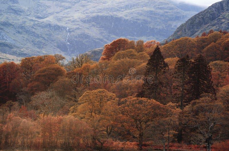 湖区惊人的秋天秋天颜色风景在Cumbria 免版税库存照片