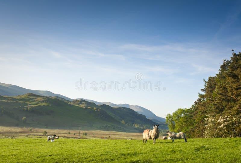 湖区, Cumbria,英国 库存照片