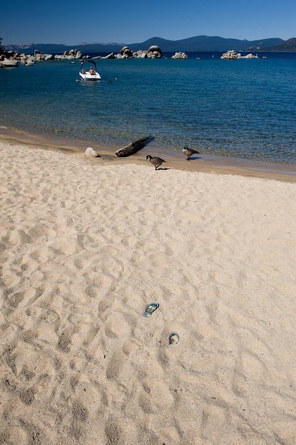 湖含沙岸tahoe 免版税图库摄影