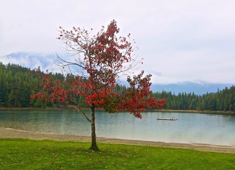湖吹口哨加拿大 库存图片