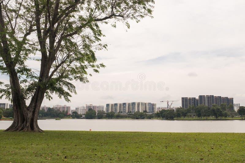 湖和庭院 库存图片