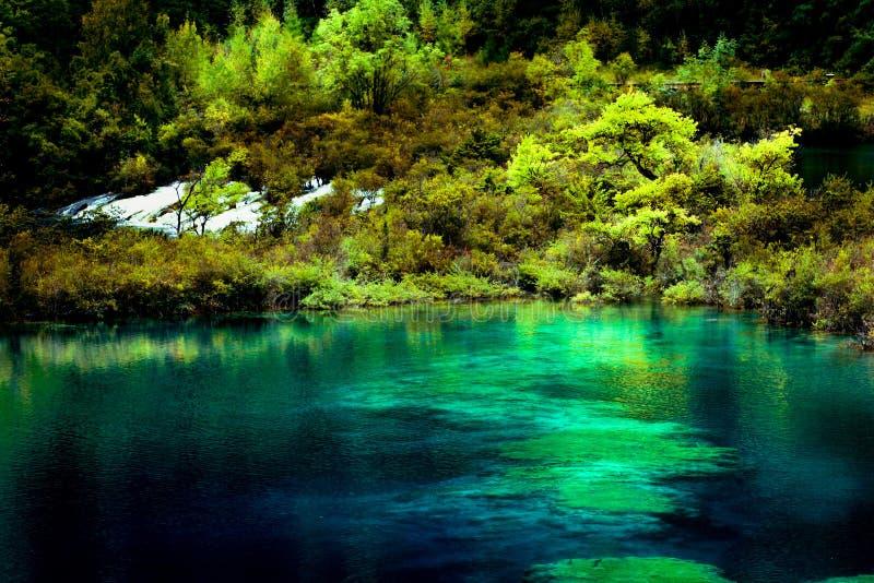 湖和树在九寨沟风景名胜区,四川,中国 库存图片