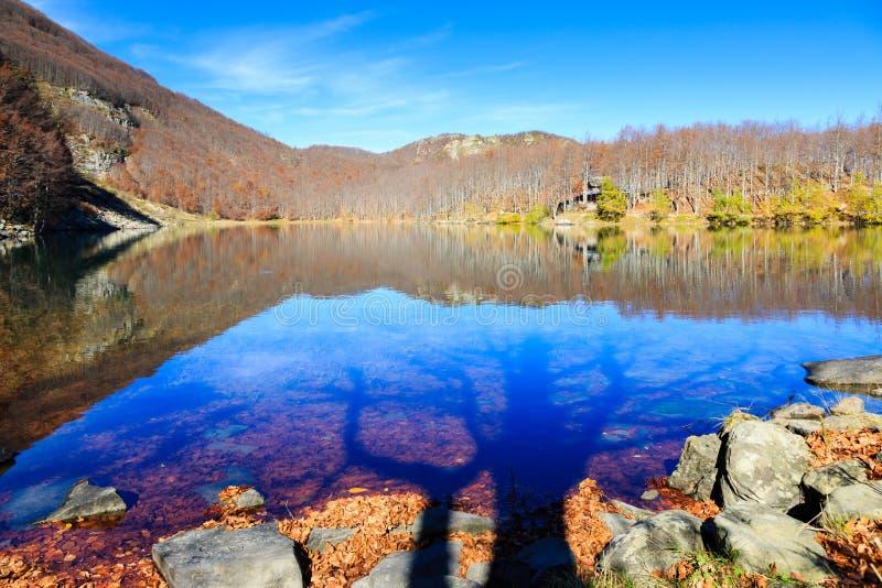 湖和树阴影 免版税库存图片