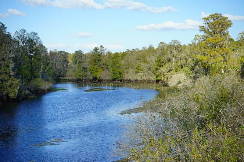 湖和沼泽 库存照片