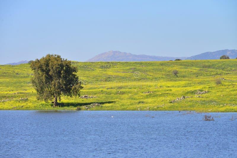 湖和草甸在戈兰高地 免版税图库摄影