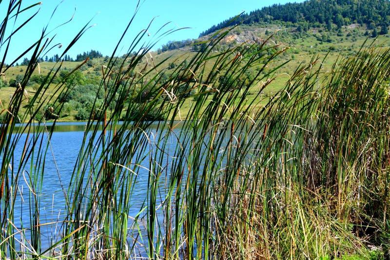 湖和landcsape在罗希亚蒙塔讷, Apuseni山 库存照片