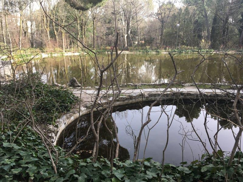 湖在公园 免版税库存照片