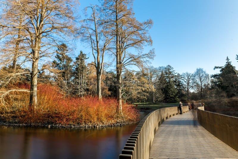 湖在冬天在Kew庭院里,伦敦 库存图片
