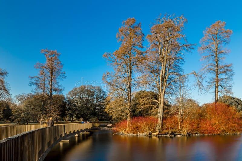 湖在冬天在Kew庭院里,伦敦 免版税库存照片