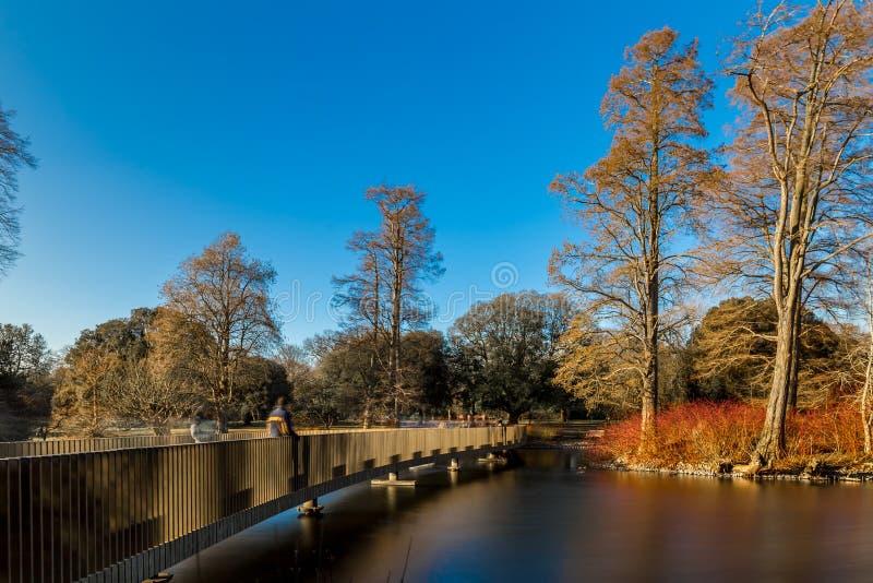 湖在冬天在Kew庭院里,伦敦 库存照片