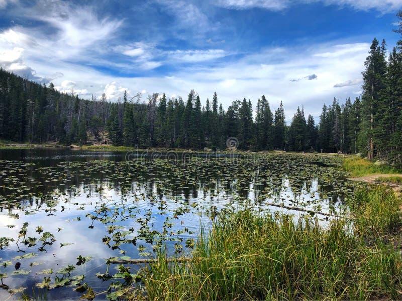 湖在埃斯特斯公园,科罗拉多 库存照片