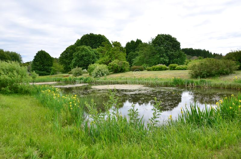 湖在森林里,创造和谐用周围的自然 图库摄影